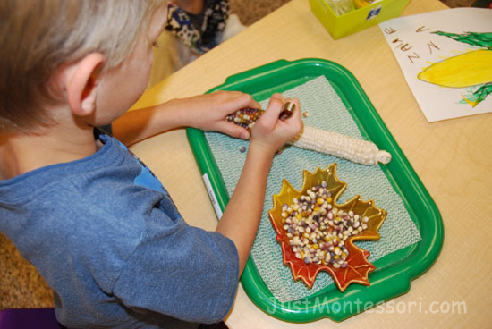 Children can use tweezers to remove kernels from a corn cob to be used later for an art activity or a spooning exercise.