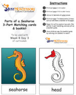 Parts of a Seahorse 3-Part Matching
