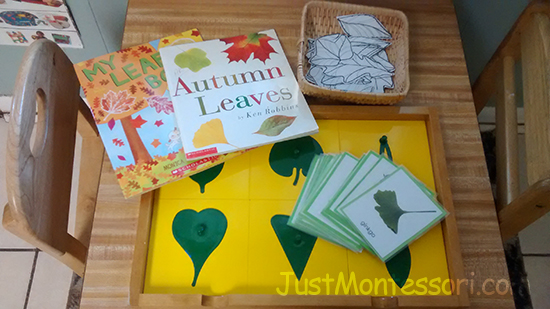 Autumn – Talking about Leaves with the Botany Cabinet