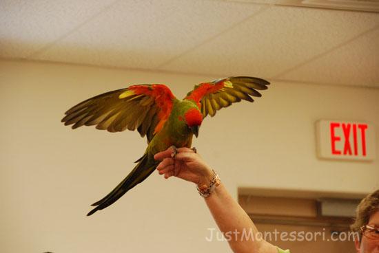 Mobile Zoo Visit - Parrots