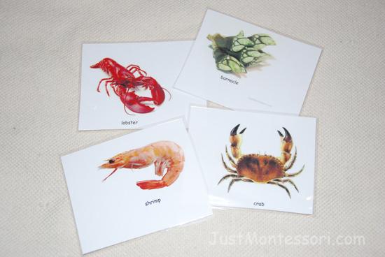 Kinds of Crustaceans