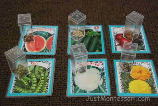 Seed Matching Activity
