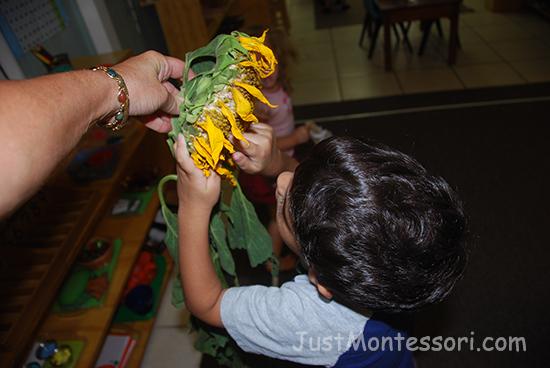 Sunflower Explore
