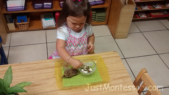 Exploring Kinds of Seeds