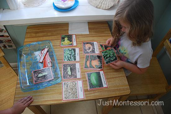 Pumpkin Growth Sequence Matching Card Set
