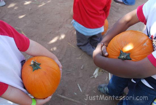 Pumpkin Patch Field Trip Find